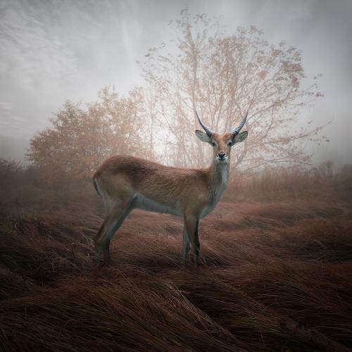 Leszek Bujnowski - Colors of autumn