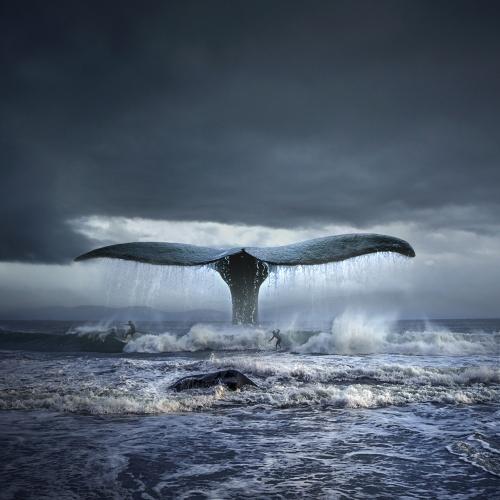 Tomasz Zaczeniuk - Surfing with whales
