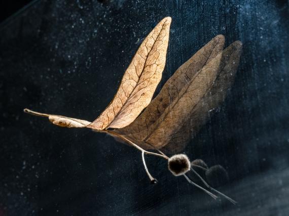 Małgorzata Marczuk - Dragonfly