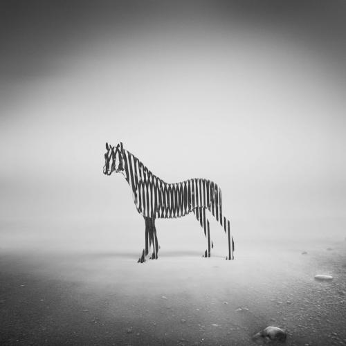 Eugene Soloviev - Zebra
