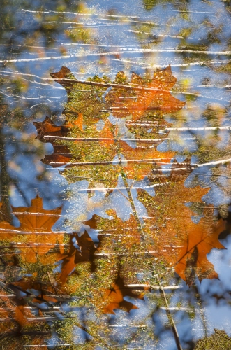 Małgorzata Marczuk - Autumn in the marsh