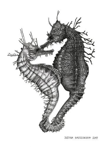 Justyna Brzozowska - Seahorses