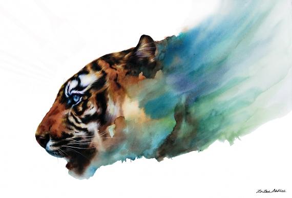 zazac namoo - Tiger