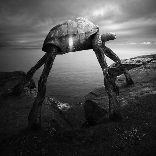 Tomasz Zaczeniuk - Turtlezaurus