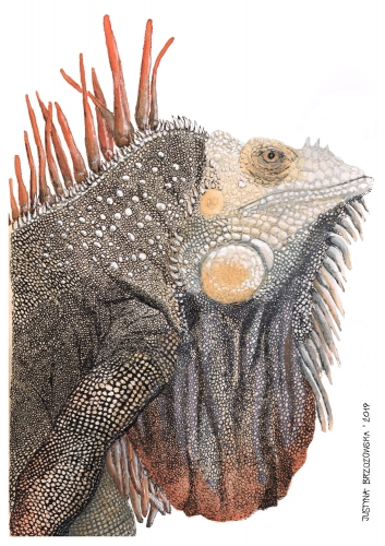 Justyna Brzozowska - Maurice the reptile