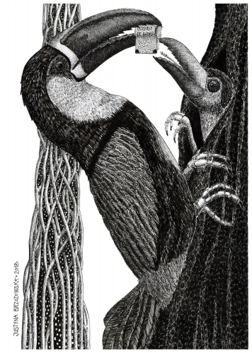 Justyna Brzozowska - Feeding Toucan