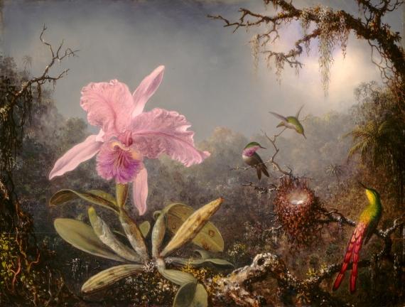Orchidea i trzy kolibry