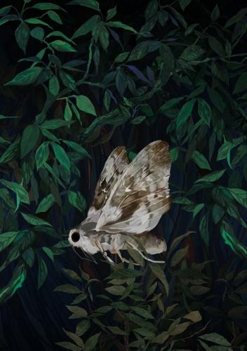 Kasia Łubińska - Moth