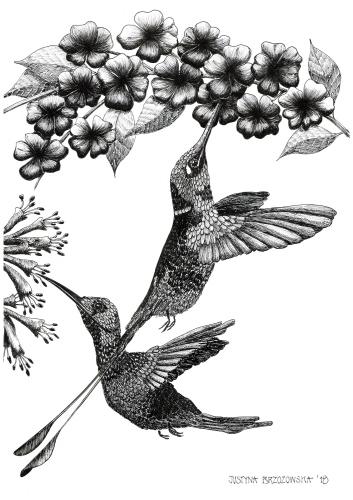 Justyna Brzozowska - Krysia's hummingbirds