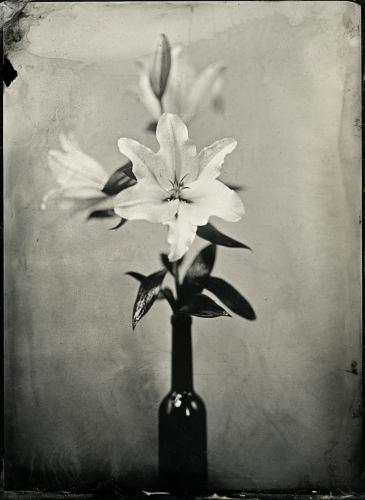 Joanna Borowiec - Kwiaty