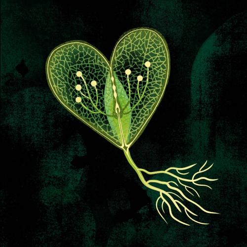 Katarzyna Bogdańska - Sprout