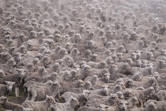 Marcin Dobas - Sheeps