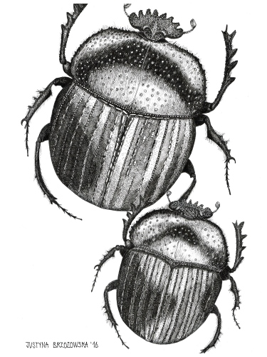 Justyna Brzozowska - Scarabs