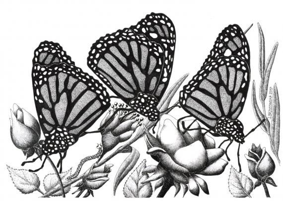 Justyna Brzozowska - Schmetterlinge