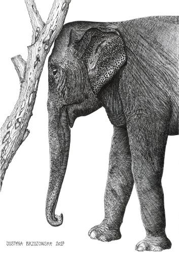 Justyna Brzozowska - Elephant