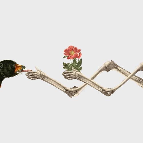 Resatio Adi Putra - Flora/Fauna #1