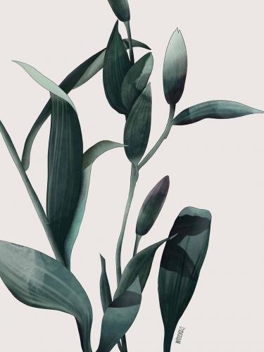 Agata Wierzbicka - Lilies White