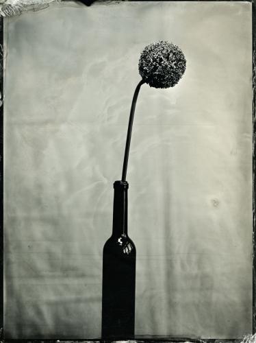 Joanna Borowiec - Flower5