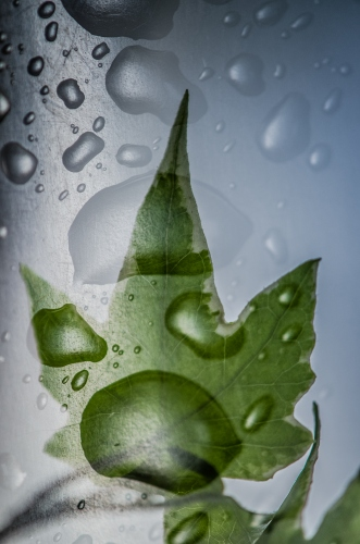 Małgorzata Marczuk - Drops of green II