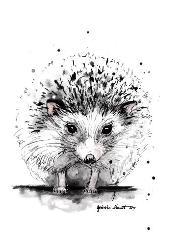 Agnieszka Nawrat - Hedgehog