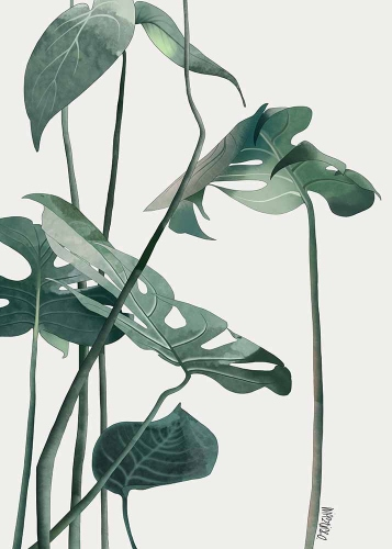 Agata Wierzbicka - Leaves - Monstera
