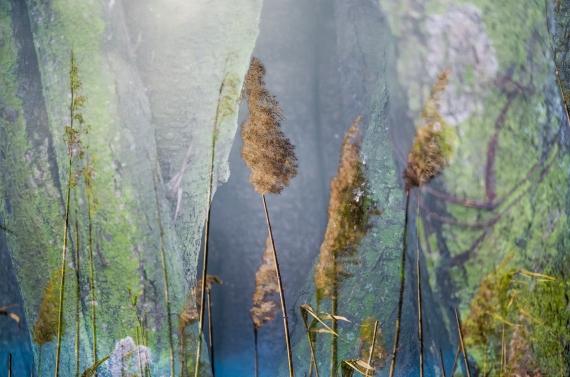 Małgorzata Marczuk - Grass fluffiness