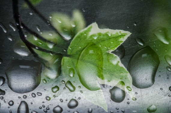 Małgorzata Marczuk - Drops of green I