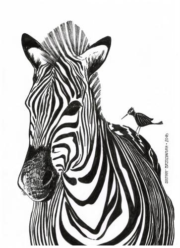 Justyna Brzozowska - Zebra