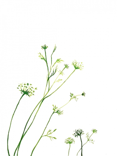 Małgorzata Goczewska - The Meadow