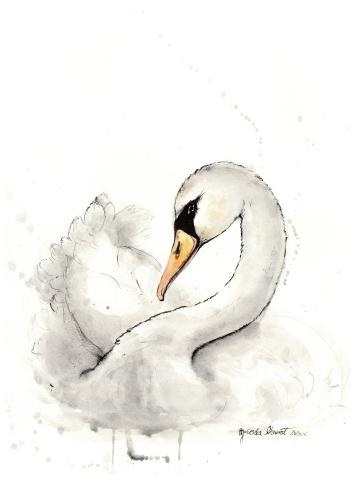 Agnieszka Nawrat - Swan