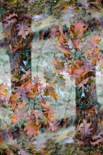Małgorzata Marczuk - The Dance of Autumn