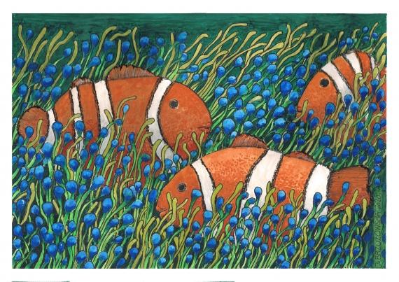 Justyna Brzozowska - Clownfish