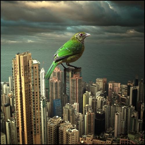 Tomasz Zaczeniuk - Surreal Hong Kong