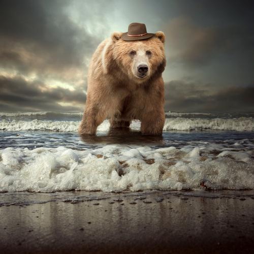 Tomasz Zaczeniuk - Teddy bear