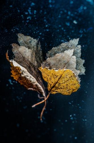 Małgorzata Marczuk - Autumn impression II
