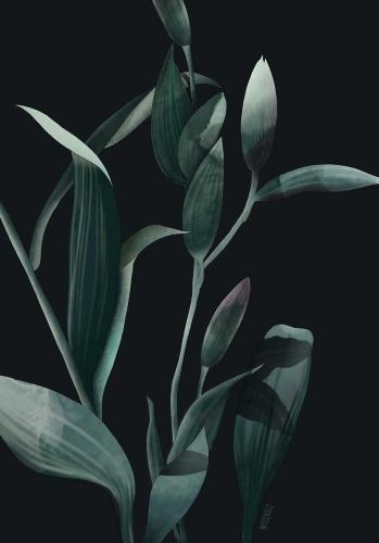 Agata Wierzbicka - Lilies Dark