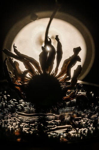 Małgorzata Marczuk - Full moon