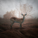 Colors of autumn - Leszek Bujnowski