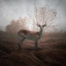 Colors of autumn - Leszek Bujnowski