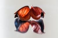 Still life - Małgorzata Marczuk