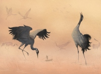 The tiny travelers - cranes - Marcin Minor