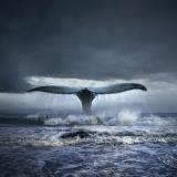 Surfing with whales - Tomasz Zaczeniuk