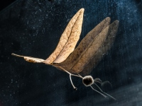 Dragonfly - Małgorzata Marczuk