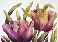 Tulipany 6 - Anna Wojciechowska-Paprocka