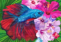 Betta splendens - Monika Wyłoga