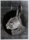 Obverse - rabbit - Petrela Kuźmicka