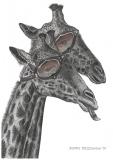 Giraffes - Justyna Brzozowska
