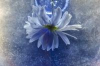 Blue - Małgorzata Marczuk