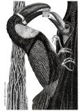 Feeding Toucan - Justyna Brzozowska