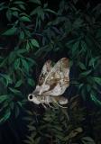 Moth - Kasia Łubińska